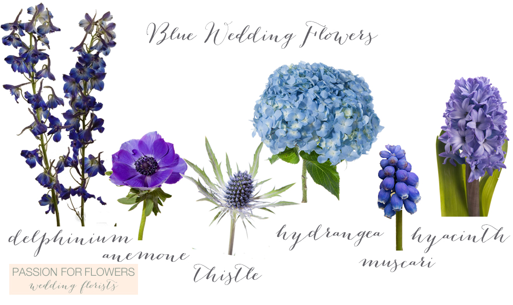 Blue wedding flowers passion for flowers details blue wedding flowers junglespirit Images