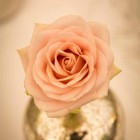 Blush pink roses in mercury silver vases