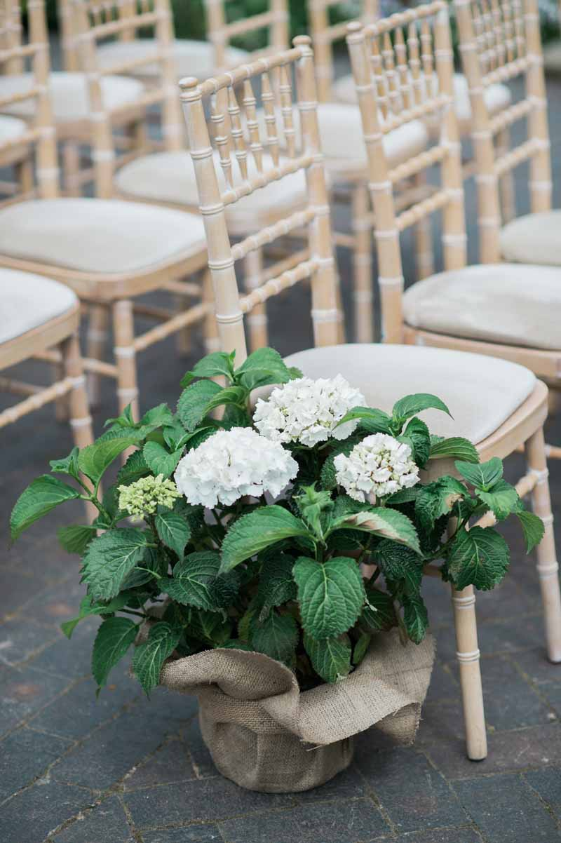 Hydrangea plants as aisle decorations for ooutdoor wedding ceremony
