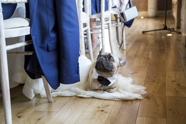 Dogs Pugs at weddings Elmore Court