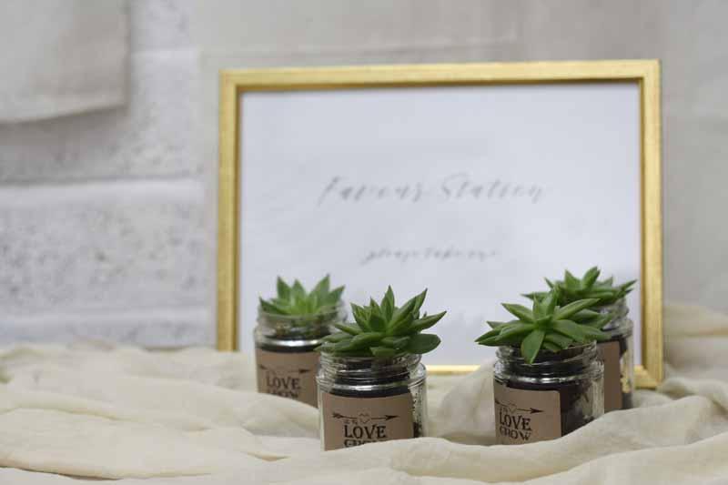 Succulent wedding favours (2)