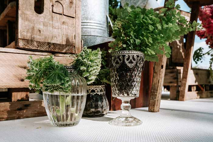 Ferns in glass vases wedding ideas