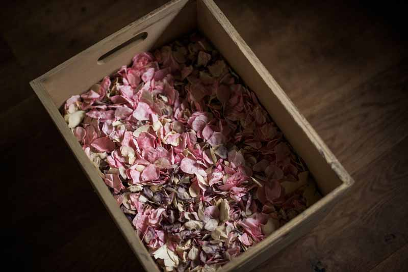 Delphinium petals confetti natural