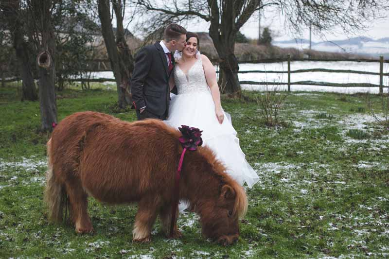 Shetland pony wedding photos